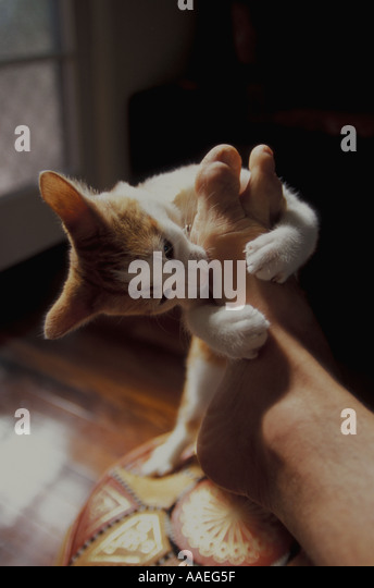 how to stop a kitten from biting feet