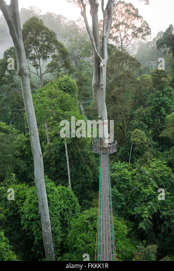 Rainforest canopy walkway Danum Valley Sabah Borneo - Stock Image & Borneo Rainforest Canopy Walkway Stock Photos u0026 Borneo Rainforest ...