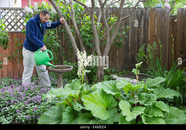 Man Filling Bird Bath With Watering Can In Backyard Garden.   Stock Image