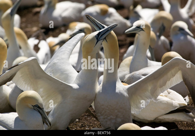 Elk Island National Park Ami