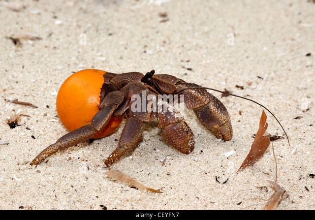 Pacific Garbage Stock Photos & Pacific Garbage Stock Images - Alamy