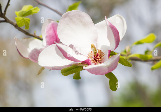 buddhist singles in magnolia Play and download latest popular music mp3 with a good quality online streaming you can find more than a million free mp3 for downloads.