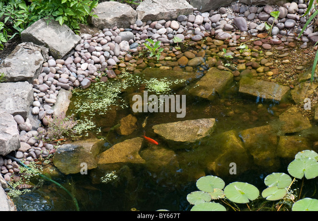 Garden pond uk fish stock photos garden pond uk fish for Fish ponds for small gardens