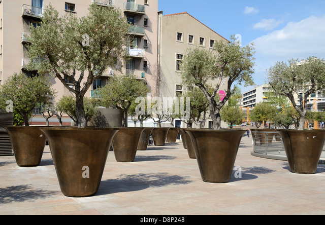 Tree planters stock photos tree planters stock images for Olive trees in pots winter care