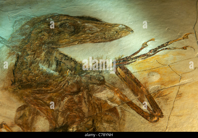 Liaoning Fossil Stock Photos & Liaoning Fossil Stock ...