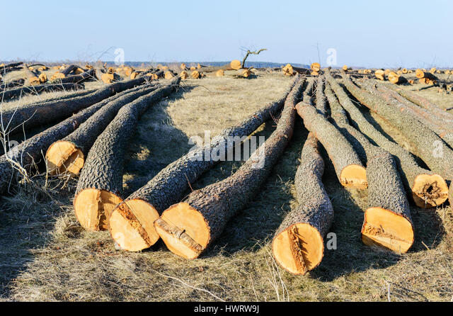 how to cut a large log on the ground