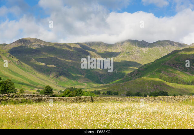 daisy field mountain sky - photo #29