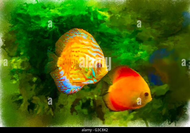 Watercolor Fish Illustration Stock Photos Watercolor
