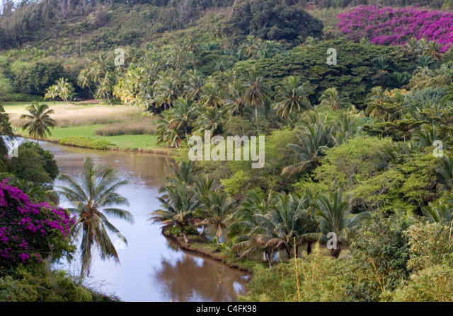 View At National Tropical Botanical Garden.Kauai, Hawaii   Stock Image