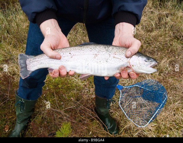 catching rainbow trout stock photos & catching rainbow trout stock, Fly Fishing Bait