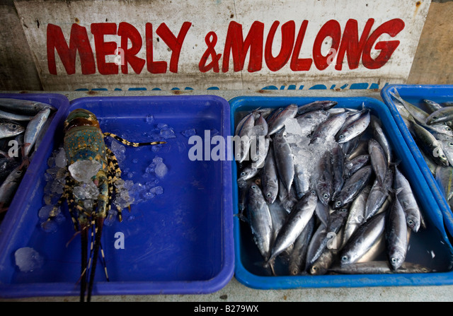 Fish market in philippines stock photos fish market in for Fresh fish market near me