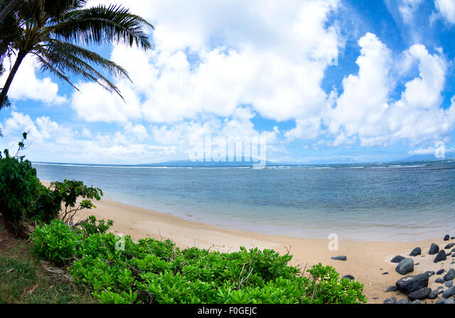 Beach Foliage Stock Photos Beach Foliage Stock Images Alamy
