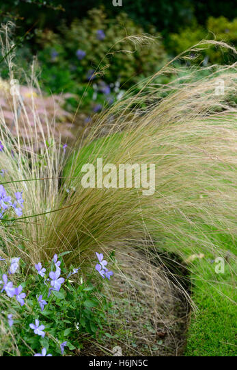 Ornamental grasses border grasses stock photos for Grasses planting scheme