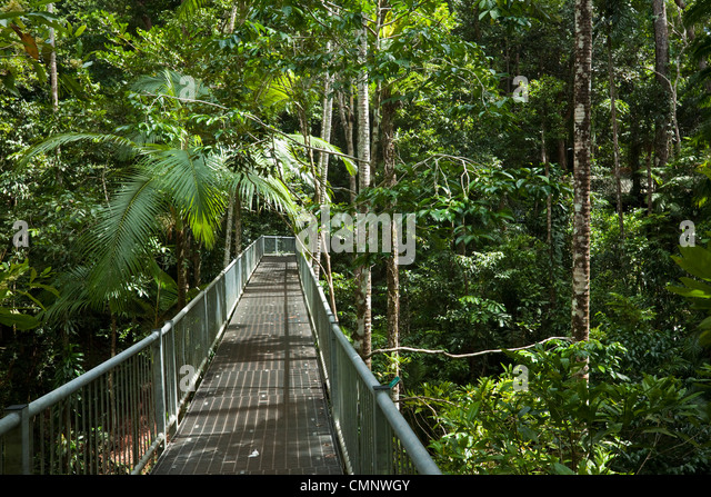 Aerial walkway at the Daintree Rainforest Discovery Centre. Daintree National Park Queensland Australia & Daintree Discovery Centre Stock Photos u0026 Daintree Discovery Centre ...