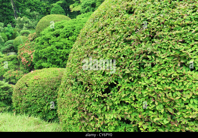 Trimmed Bush Stock Photos Trimmed Bush Stock Images Alamy