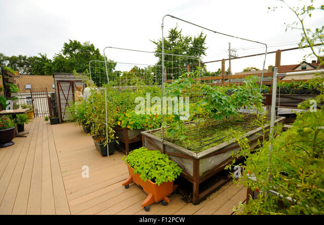 Rooftop vegetable garden above restaurant in Chicago  Illinois    Stock  Image. Rooftop Vegetable Garden Above Restaurant Stock Photos   Rooftop