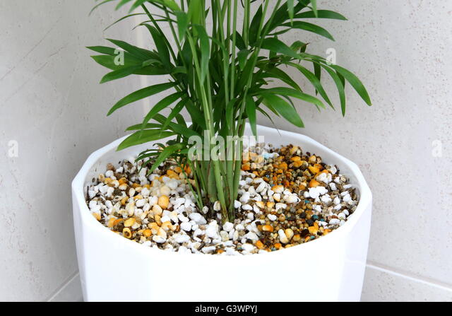Vermiculite For Plants Vermiculite Sto...