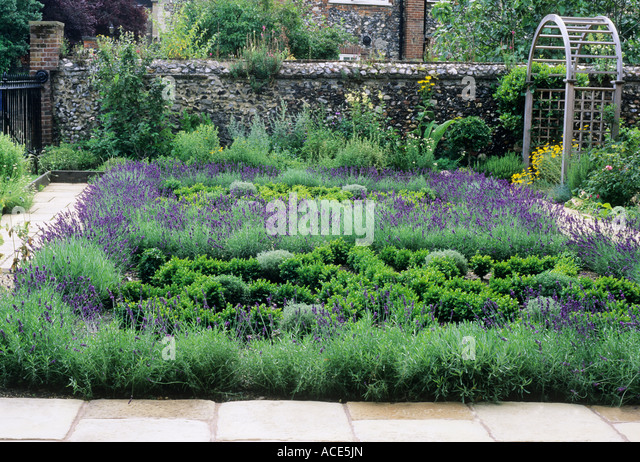 Hedges Lavender Stock Photos Hedges Lavender Stock