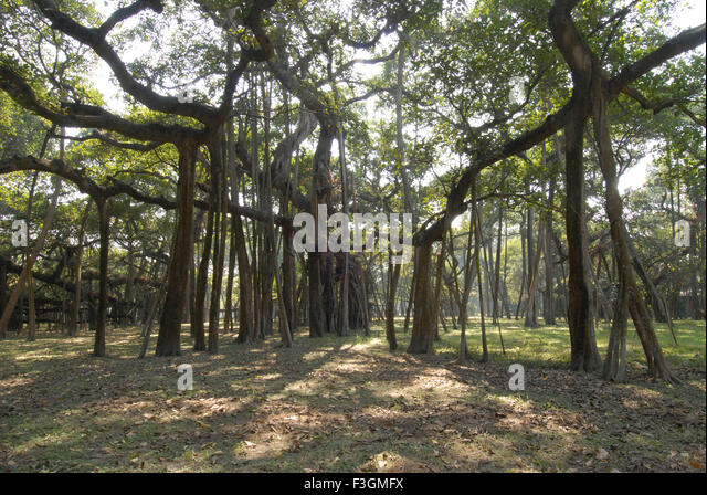 Largest Botanical Garden In World