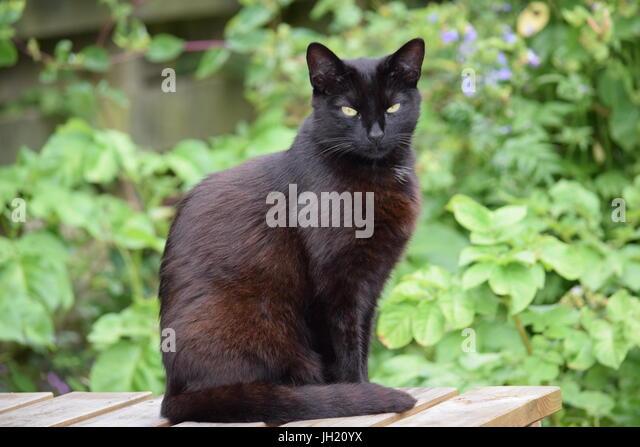Semi Feral Cat Hiding How Long