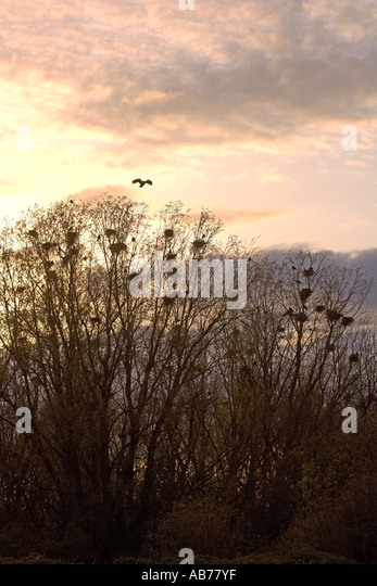 crows landing asian singles Description of crows landing the community of crows landing is located on the west side of stanislaus county, straddling state highway 33 approximately one and one-half miles to the northwest of the town is the.
