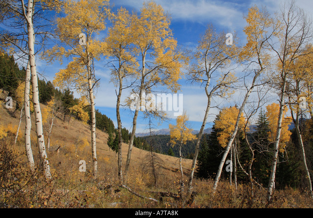 Beaverhead Stock Photos Amp Beaverhead Stock Images Alamy