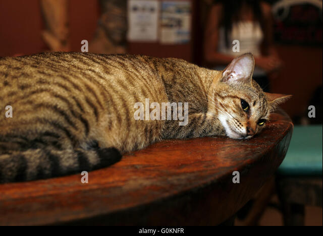 cat on the table stock photos cat on the table stock