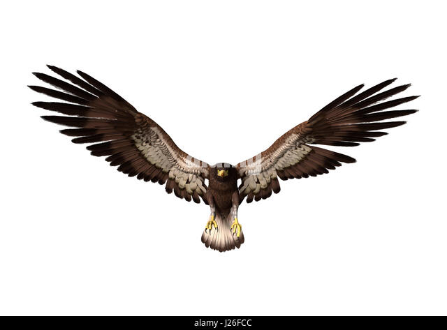 bald eagle render by - photo #10