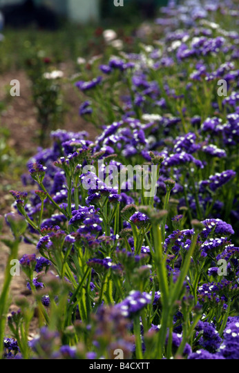 lavender colored wildflowers - photo #22