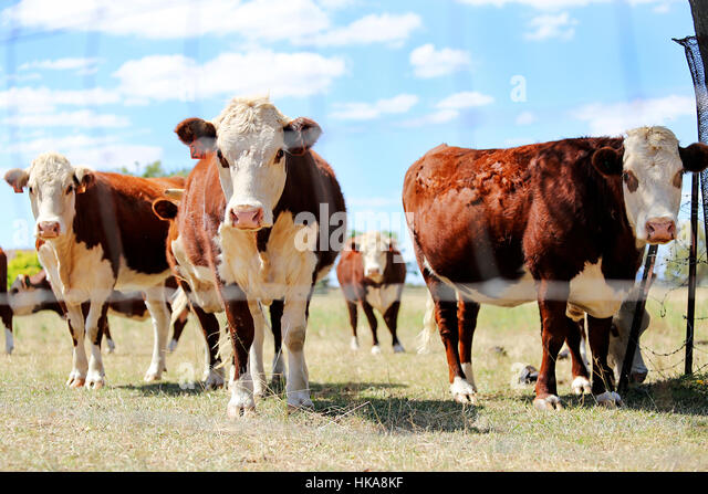 Mudgee Australia Stock Photos Amp Mudgee Australia Stock