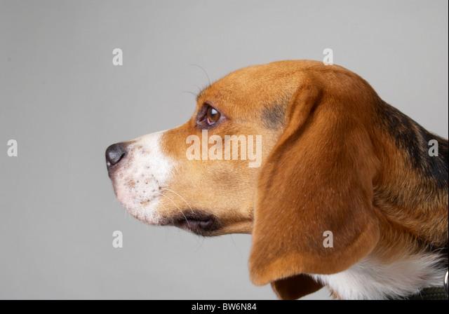 New Maryland Dog Bite Law