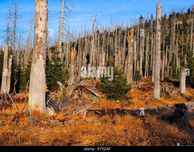 Acid Rain Damage Forest Stock Photos & Acid Rain Damage Forest ...
