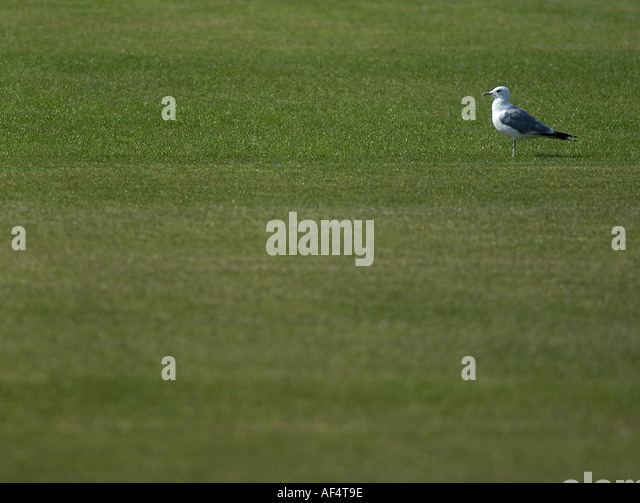 Cricket Pitch Stock Photos Amp Cricket Pitch Stock Images
