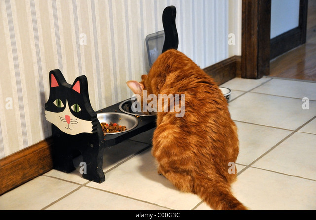 Cats Eating From Same Bowl