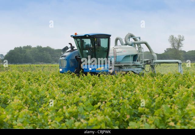 integrated vineyard pest management plan Home grape integrated pest management (ipm) grape integrated pest management (ipm) jump-down menu vineyard floor management – northern grapes project webinar.