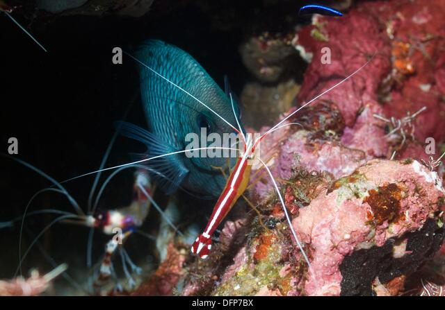 Cleaning Shrimps Stock Photos & Cleaning Shrimps Stock Images - Alamy