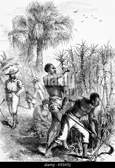 slave life on sugar plantation in british caribbean A very different view on the history of slavery can be seen at st nicholas abbey, a meticulously restored sugar plantation in the northeast of the island the estate, which began to grow sugar in.
