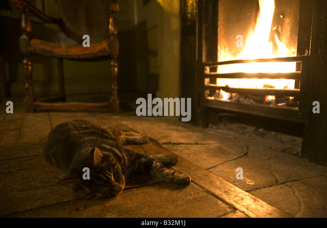 Fire Cat Stock Photos & Fire Cat Stock Images - Alamy
