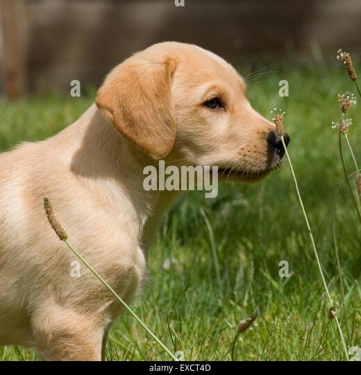 Costs Of Dog Ownership Uk