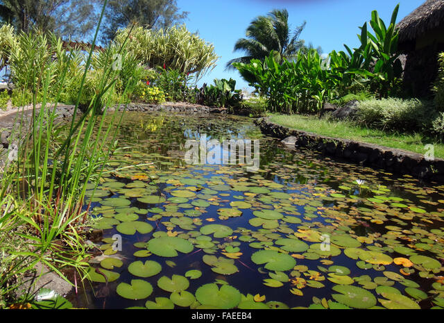 Paofai stock photos paofai stock images alamy for Ornamental pond fish port allen