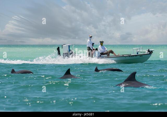 Dolphins sea florida stock photos dolphins sea florida for Dolphin fishing florida