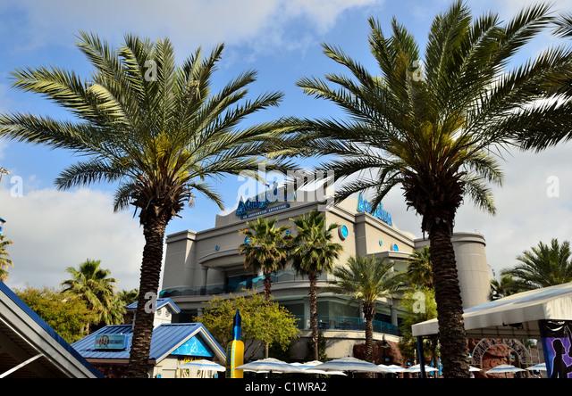 Texas Palm Trees Stock Photos Texas Palm Trees Stock