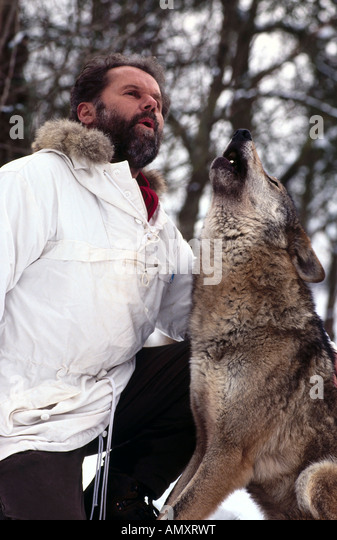 merzig men Wolf researcher werner freund howls while sitting in an enclosure for arctic  wolves at wolfspark werner freund, in merzig, on january 24,.