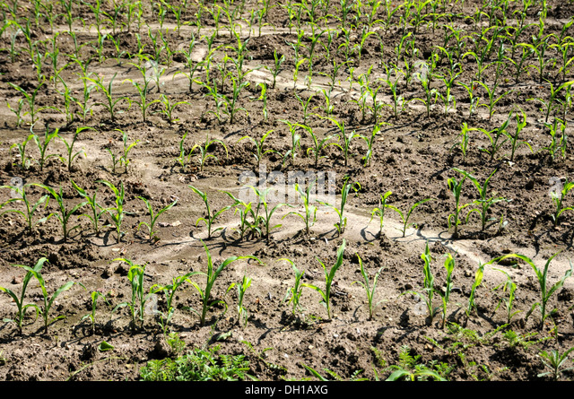 soil erosion central vietnam Part ii: soil surface management for prevention of soil degradation and rehabilitation of degraded lands will appear in a forthcoming issue abstract this paper examines soil and land degradation.