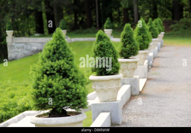 dwarf pine trees stock photos  dwarf pine trees stock images  alamy, Natural flower