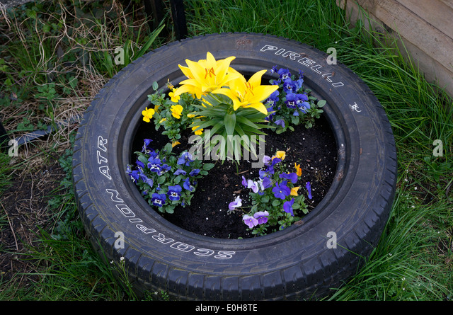 Upcycle stock photos upcycle stock images alamy for Car tire flower planter
