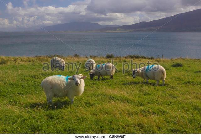 Dingle peninsula photo competition