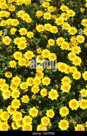 Ground cover yellow flowers gallery flower decoration ideas ground cover yellow flowers choice image flower decoration ideas ground cover yellow flower images flower decoration mightylinksfo