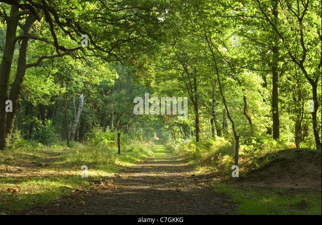 Sherwood Forest Uk Stock Photos Amp Sherwood Forest Uk Stock