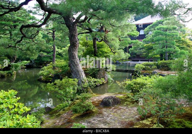 Nice Pine Tree Garden In Ginkaku Ji Or Temple Of The Silver Pavilion In Kyoto  Japan